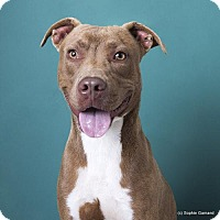 Adopt A Pet :: Omar - Anniston, AL
