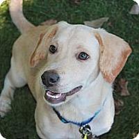 Adopt A Pet :: Warrior - Homewood, AL
