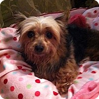 Adopt A Pet :: Jasmine - Freemont, CA