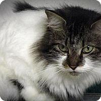 Adopt A Pet :: Skye - Seminole, FL