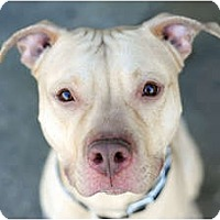 Adopt A Pet :: Joey - Reisterstown, MD