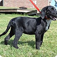 Adopt A Pet :: *Bruno - PENDING - Westport, CT