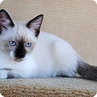 Adopt A Pet :: Sushi - Palmdale, CA