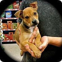 Adopt A Pet :: Roscoe - Cypress, CA