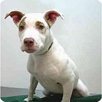 Adopt A Pet :: Sunday - Port Washington, NY