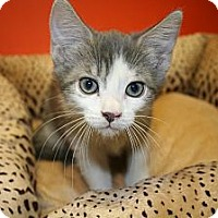 Adopt A Pet :: AUSTIN - SILVER SPRING, MD
