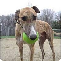 Adopt A Pet :: Petro (Petro Mcpistol) - Chagrin Falls, OH