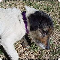 Adopt A Pet :: TIKA - Scottsdale, AZ
