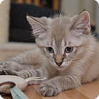 Adopt A Pet :: Danika - Davis, CA