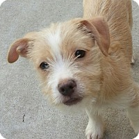 Adopt A Pet :: Shasta*ADOPTED!* - Chicago, IL