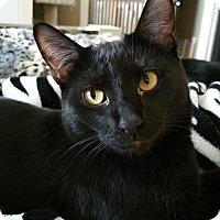 Adopt A Pet :: Koda - Blaine, MN