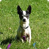 Adopt A Pet :: Spot - Wyanet, IL