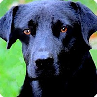 Adopt A Pet :: BARRON(TRAINED-SO SMART!) - Wakefield, RI