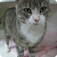 Adopt A Pet :: Dale Jr. - Hamburg, NY