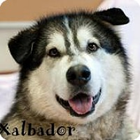 Adopt A Pet :: XALBADOR - Seattle, WA