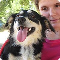 Adopt A Pet :: Jackson - Turlock, CA