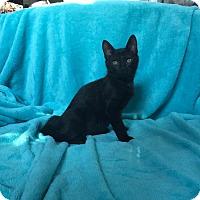Adopt A Pet :: Squakum - Brick, NJ