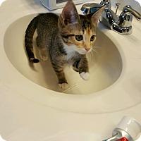 Adopt A Pet :: Izzy - Covington, KY