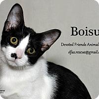 Adopt A Pet :: Boisu - Ortonville, MI