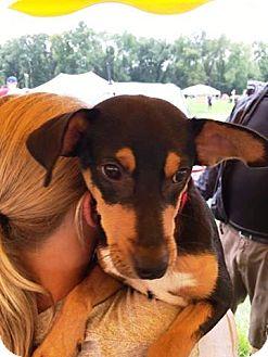 Shepherd (Unknown Type)/Terrier (Unknown Type, Medium) Mix Dog for adoption in Kalamazoo, Michigan - Bradford
