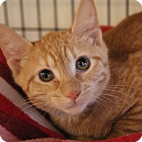Adopt A Pet :: Bunky Bear - Chicago, IL