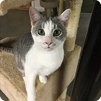 Adopt A Pet :: Pepper - Butner, NC