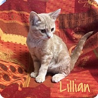 Adopt A Pet :: Lillian - Harrisville, WV