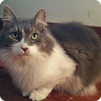Adopt A Pet :: Zeus - Sharon Center, OH
