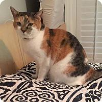 Adopt A Pet :: Lydia - Summerville, SC