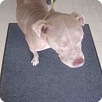 Adopt A Pet :: Mugsy - Newnan City, GA