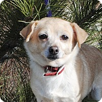 Adopt A Pet :: Snoopy - Portola, CA