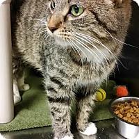 Adopt A Pet :: Eda - Chippewa Falls, WI