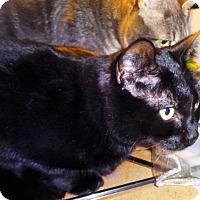 Adopt A Pet :: Rios - Vancouver, BC
