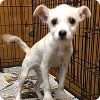 Adopt A Pet :: DERRICK - San Pablo, CA