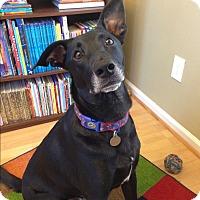 Adopt A Pet :: Luka - Nashville, TN
