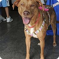 Adopt A Pet :: Chloe - Humble, TX