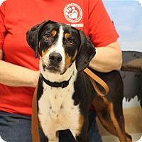 Adopt A Pet :: Tara - Elyria, OH