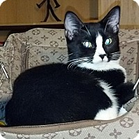 Adopt A Pet :: Tina - Dallas, TX