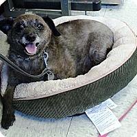 Adopt A Pet :: Chip - Vista, CA