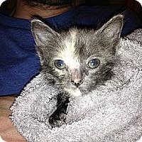 Adopt A Pet :: Shiloh - Fresno, CA
