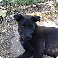 Adopt A Pet :: Turco - Linton, IN
