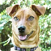 Adopt A Pet :: Bobbi - Mocksville, NC
