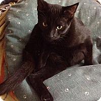 Adopt A Pet :: Malik - Byron Center, MI