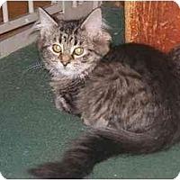 Adopt A Pet :: Sherrys DLH Kittens - Cincinnati, OH