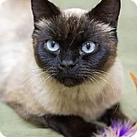 Adopt A Pet :: Talula - Chicago, IL