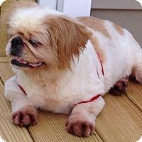 Adopt A Pet :: Blossom - Chantilly, VA