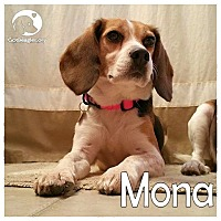 Adopt A Pet :: Mona - Novi, MI