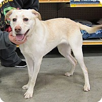 Adopt A Pet :: Sutton - West Richland, WA