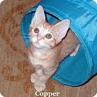 Adopt A Pet :: Copper - Bentonville, AR