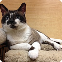 Adopt A Pet :: Fry - Temple, PA